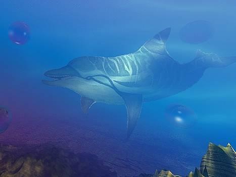 Flipper one by Darren Cannell