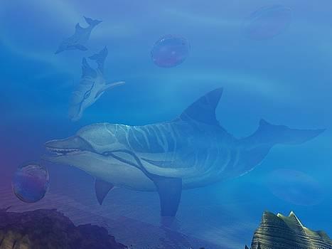 Flipper two by Darren Cannell
