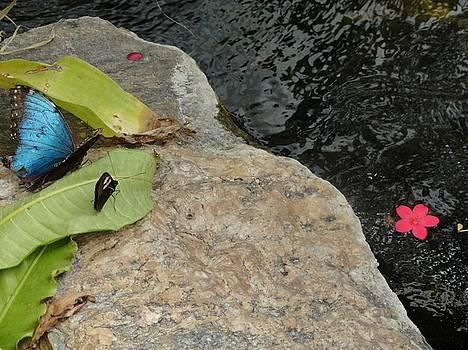 Blue Black Butterfly Pink River Flower by Mozelle Beigel Martin