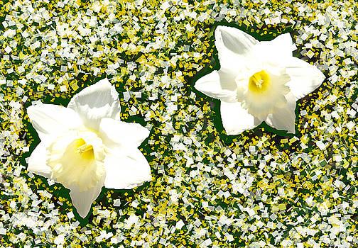Floating Daffodil's  by Kim
