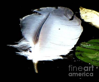 Floating Feather in Pond by Melissa Stoudt