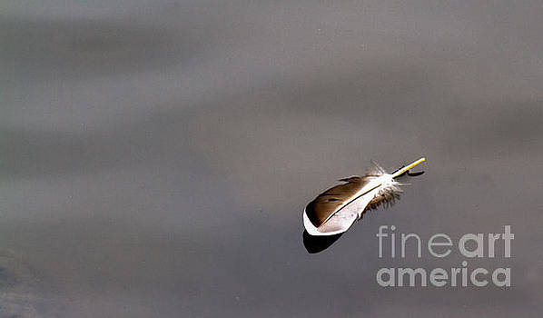 Floating Feather by Jale Fancey
