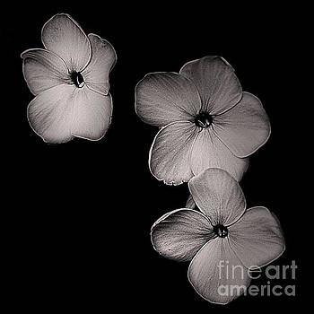 Floating Flowers In Black And White by Smilin Eyes  Treasures