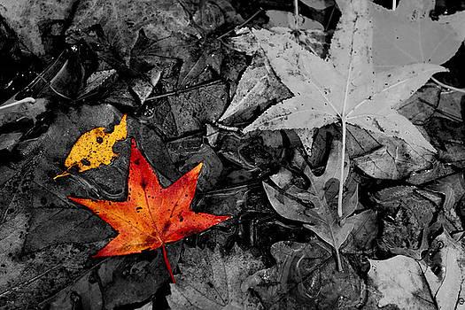 Jason Blalock - Floating Leaves