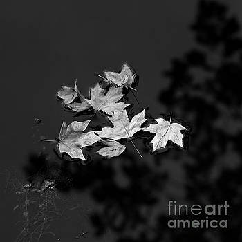 Floating Leaves by Patrick M Lynch