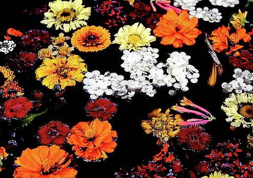 Allen Nice-Webb - Floating Petals