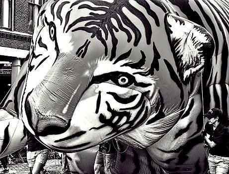 Floating Tiger by Kevin Duke