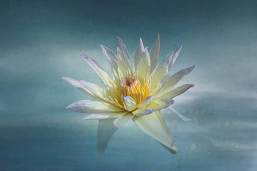 Kim Hojnacki - Floating Water Lily