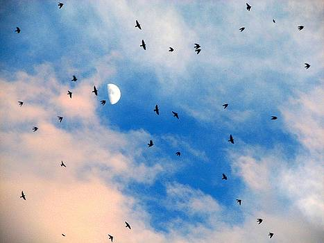 Flock and Moon by Leah Grunzke
