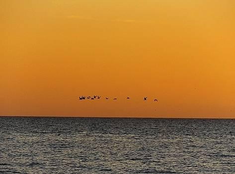 Flock by Julie Pappas