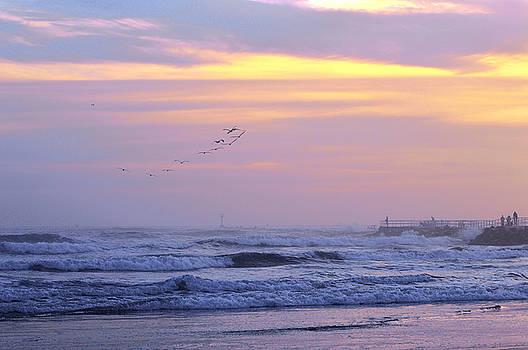 Flock of Pelicans 12-27-15 by Julianne Felton