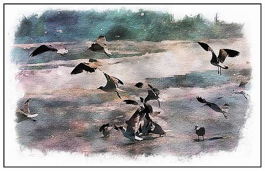Flock of Seagulls by Scott Fracasso