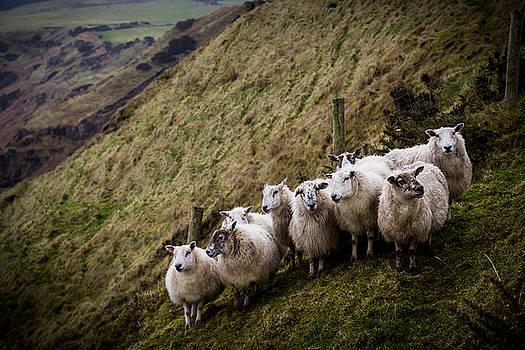 Flocking together by Alex Leonard