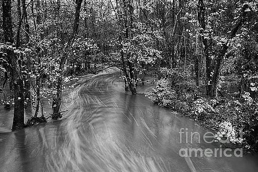 Dan Carmichael - Flooded Creek on a Rainy Autumn Day BW