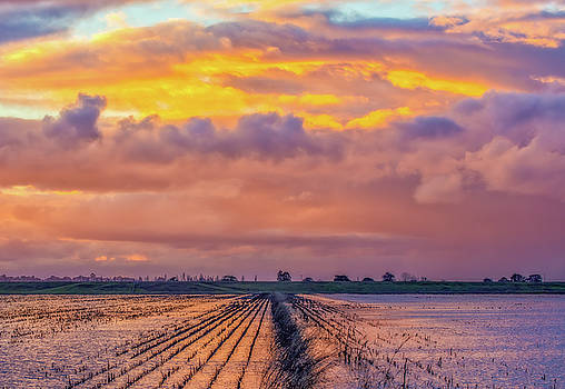 Flooded Field at Sunset by Marc Crumpler