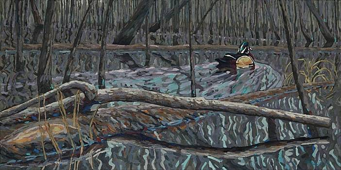 Flooded Land Wood Duck Drake by Phil Chadwick