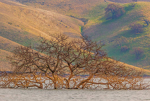 Flooded Tree and Hillside by Marc Crumpler
