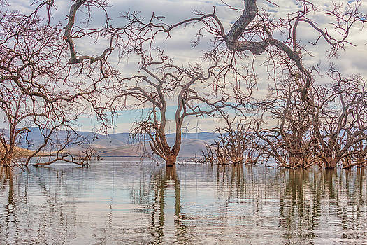 Flooded Trees at Los Vaqueros by Marc Crumpler