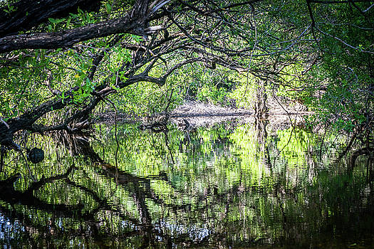 Flooded woods - Curacao Views by Gail Johnson