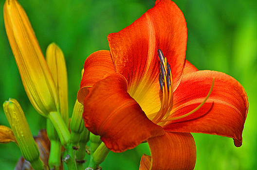 Flora 2 by Peter  McIntosh