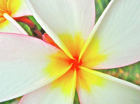 Flora Blanca by Steve McKnigt