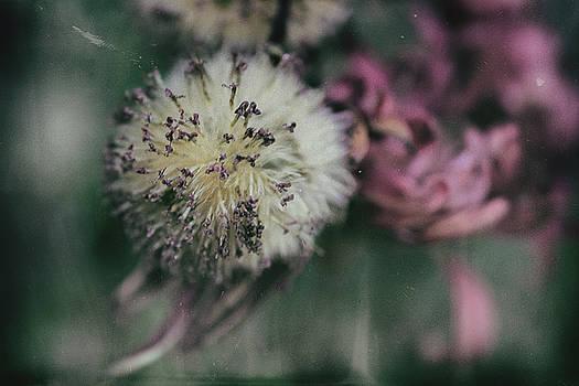 Flora by Boris Mirkin