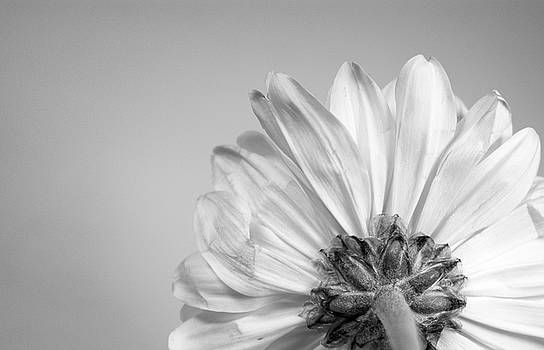 Flora - Monochrome by Stephanie Johnson