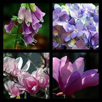 Susanne Van Hulst - Floral Beauties