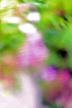 Carolyn Stagger Cokley - floral blur1735