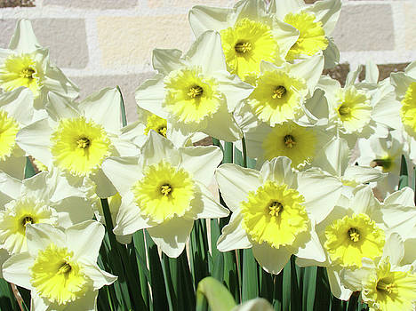 Baslee Troutman - Floral Daffodils Garden art prints Floral Bouquet Baslee Troutman