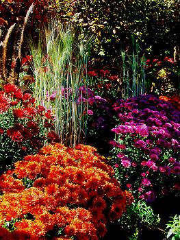 Allen Nice-Webb - Floral Display
