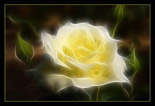 Ricky Barnard - Floral Dream
