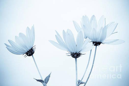 Floral Elegance by Anita Oakley