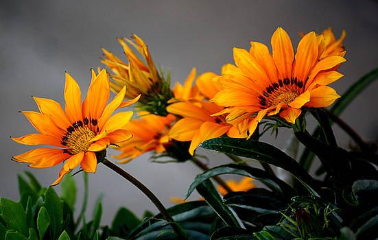 Karen Scovill - Floral Fireworks