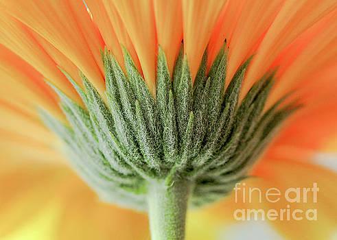 Floral Greetings by Linda Joyce