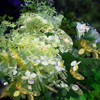 Hanne Lore Koehler - Floral Illusion