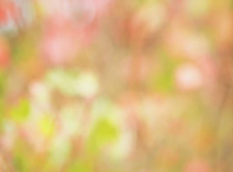 Floral Impressions by Debi Bishop