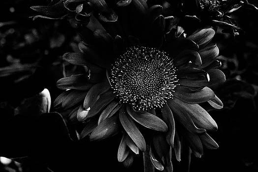 Floral by Kaos Studios