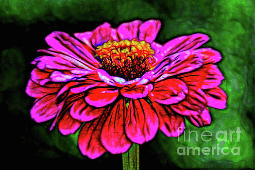 Floral Lovely by Ray Shrewsberry