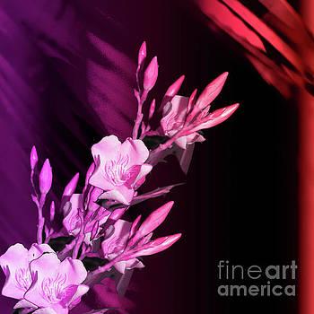 Floral Nerium by Artist Nandika Dutt