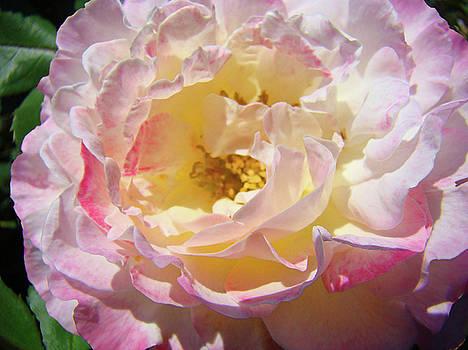 Baslee Troutman - Floral Rose art prints Garden Baslee Troutman