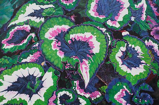 Floral Series 13 by Steven Fleit