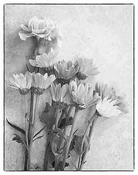 Floral Study by Dw Johnson