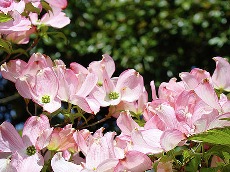 Baslee Troutman - Floral Tree Landscape Pink Dogwood Flowers Baslee Troutman