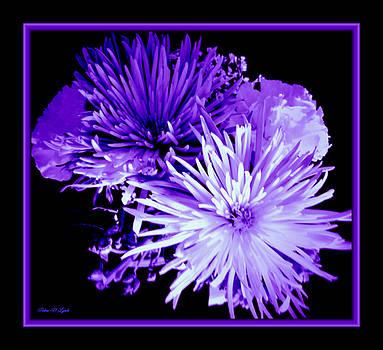 Floral Violet Hues by Debra Lynch