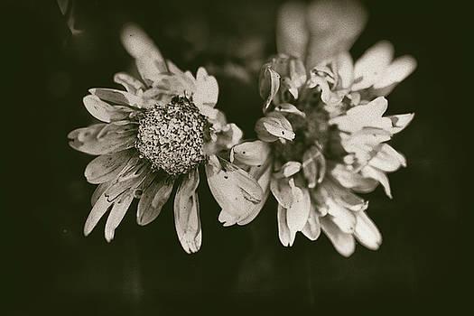 Florals by Kaos Studios