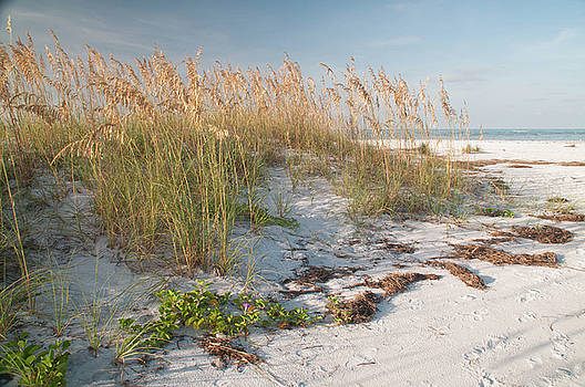 Florida Beach and Sea Oats by Geraldine Alexander