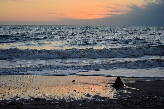 Florida Beach Landscape by Patricia Twardzik