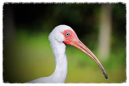 Florida Bird by Pascal Schreier