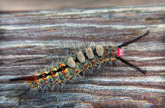 Florida Caterpillar by Hanny Heim